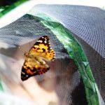 Von der Raupe zum Schmetterling – im KiGa Villa Kunterbunt Balzfeld