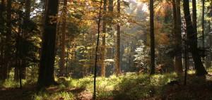 sdw_Herbstwald