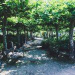 """Für Stadt und Klima – Projekt """"1250 Bäume für Sinsheim"""""""
