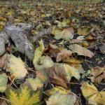 Tipps der AVR zur Entsorgung des Herbstlaubs