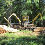 Keine Verschnaufpause für den Wald – Sommerloch wird durch den Borkenkäfer gefüllt