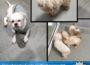 Wiesenbach-Langenzell: Fünf Hunde im Wald ausgesetzt; Polizei sucht Zeugen