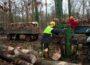 Das Kreisforstamt informiert:Brennholz selber machen – Sicherheitsregeln beachten
